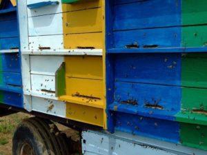 пчелиные павильоны