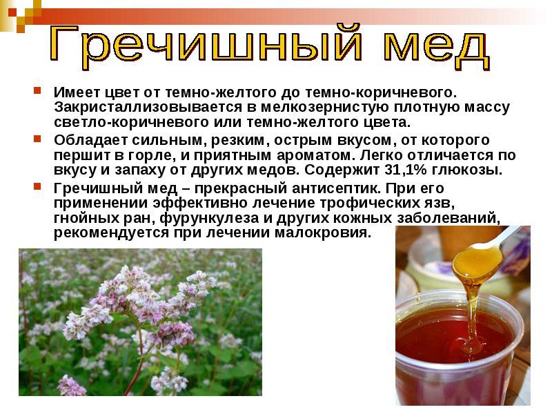 гречишный мед медонос и продукт