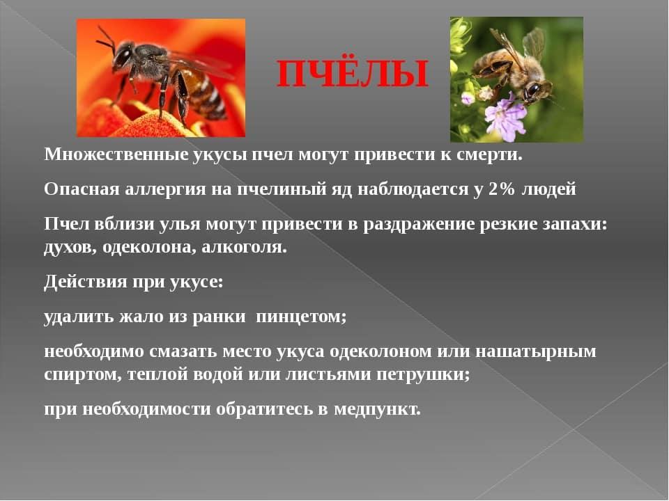 памятка при укусе пчелы