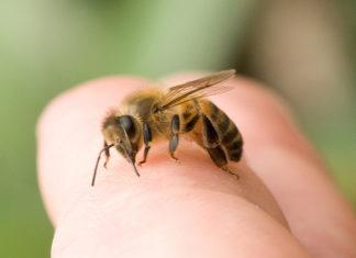 пчела жалит палец