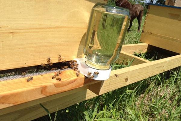 как давать сахарный сироп пчелам