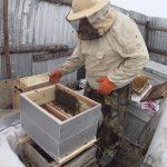 процесс пересадки пчел в новый улей