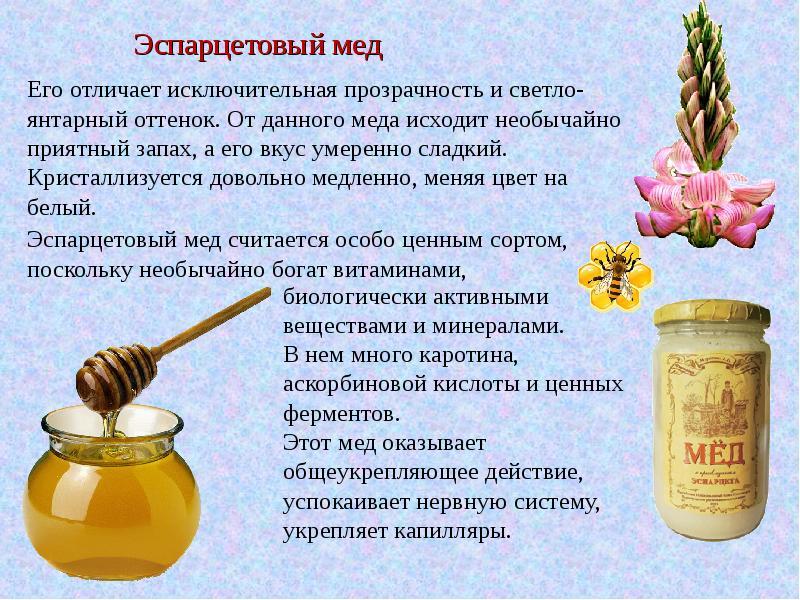 эспарцетовый мед описание