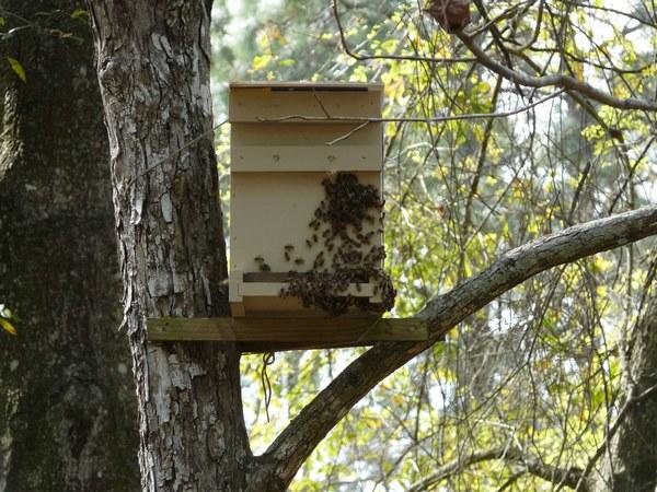 установленная ловушка для пчел