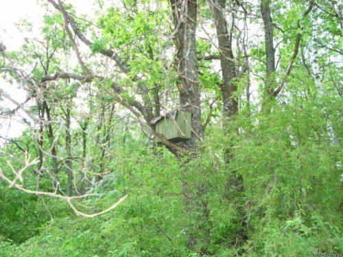 установленная в лесу ловушка для пчел