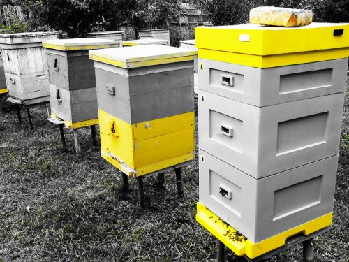 как пчелы видят цвета