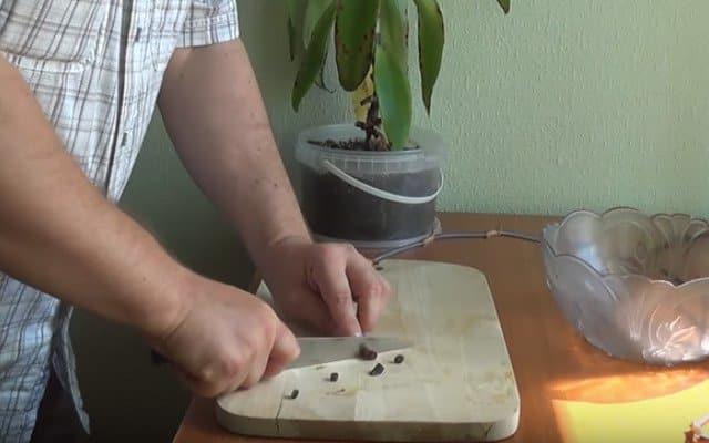 приготовление настойки золотой ус