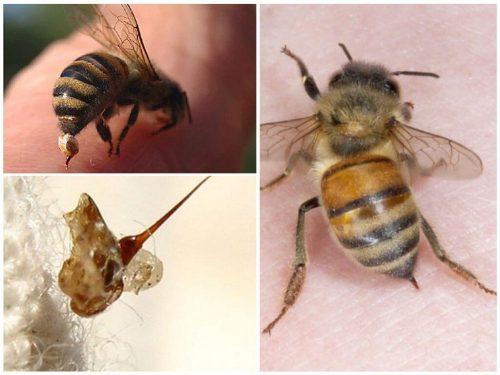 как пчела жалит