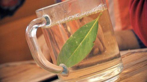 лавровый лист в чашке